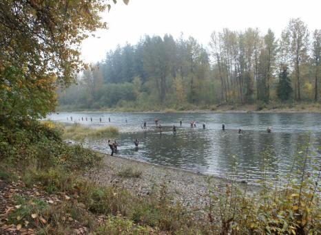 Cowlitz river bank salmon fishing for Cowlitz river fishing