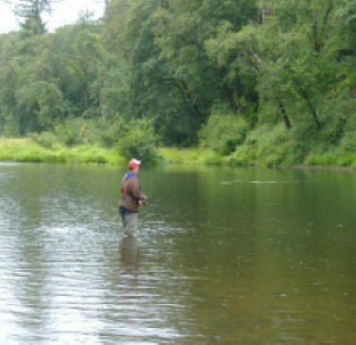 chehalis river salmon fishing upper river