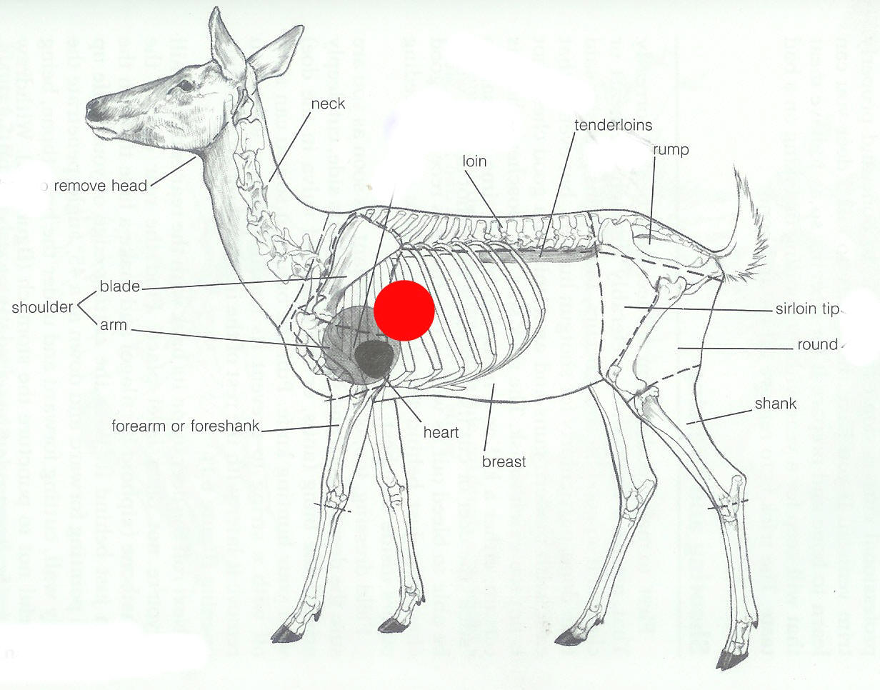 Deer Organ Chart http://www.leeroysramblings.com/deer_hunter.htm