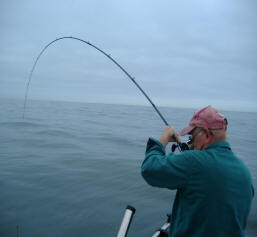 Downrigger Trolling for salmon